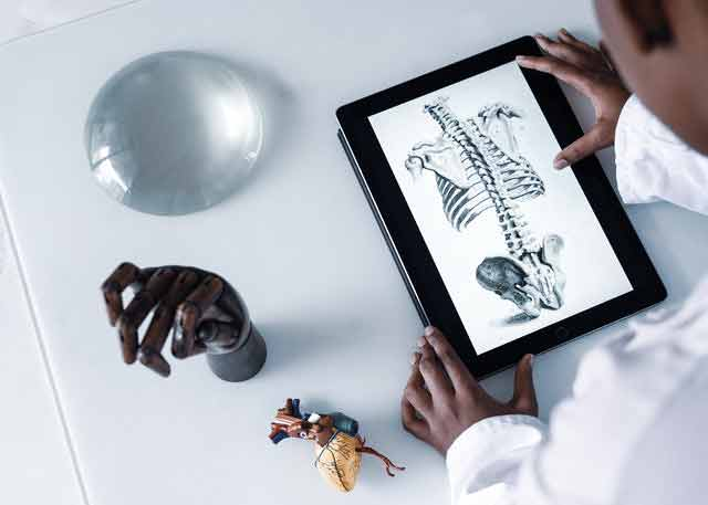 a physician working from home looking at an anatomy drawing online