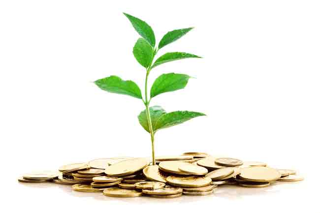 Evergreen niches - a tree growing from money